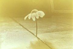 plant on my floor